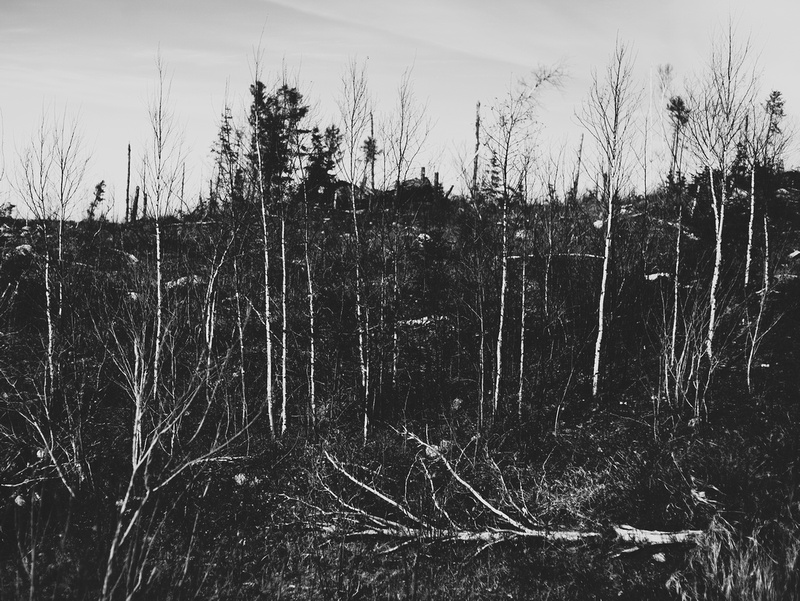 Fallen tree - nature photography in Northern Ontario