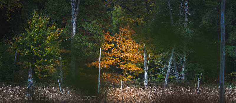 Gatineau Park tree with fall colors (yellow) during Fall Rhapsody