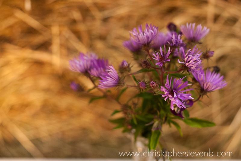 purple wildflowers at farm wedding